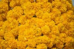 Mary Gold Flower Background y textura Imagenes de archivo
