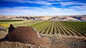 Maryhill酿酒厂哥伦比亚峡谷华盛顿 免版税图库摄影