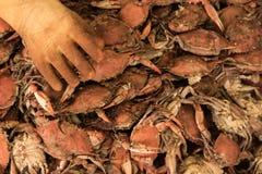 Maryland ångade krabbor Arkivbilder