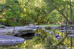 Maryland Appalachian Mountain Stream Stock Images