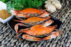 Maryland-blaue Befestigungsklammern Gedämpfte Krabben Krabbe Fest Lizenzfreies Stockbild