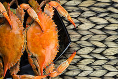 Maryland blue crabs. Steamed crabs. Crab fest. Stock Image