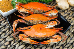 Maryland blue crabs. Steamed crabs. Crab fest. Steamed crabs with spices. Crab and Beer Festival. Maryland blue crabs. Seafood menu Stock Photo