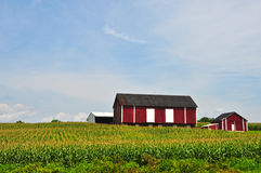 Maryland Farm. A farm in Maryland on a sunny summer day Royalty Free Stock Images
