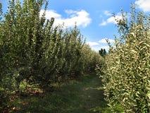 Maryland-Land-Apple-Obstgarten lizenzfreies stockbild