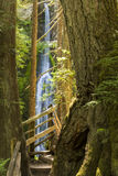 Marymere Falls and Trail. Tall trees frame Marymere Falls on the Marymere Falls trail near Lake Crescent in Olympic National Park, Washington Royalty Free Stock Photography