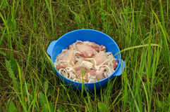 Marynowany mięso dla grilla outdoors Zdjęcia Stock