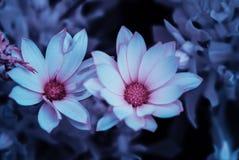 Marys blommor 2 Arkivbilder