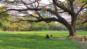 Marzec 01,2018 ludzi bierze odpoczynek pod dużym drzewem w Bangkok Zdjęcie Royalty Free