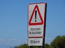 Marzec pingwiny Obrazy Stock