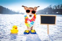 Marznąć lodowatego psa w śniegu Zdjęcia Royalty Free
