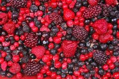Marznąć mieszane jagody jako tło Czarne jagody, malinek czarne jagody i porzeczkowy morwowy tekstura wzór, Zdjęcia Stock