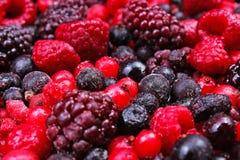Marznąć mieszane jagody jako tło Czarne jagody, malinek czarne jagody i porzeczkowy morwowy tekstura wzór, Fotografia Royalty Free