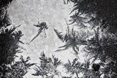 Marznący lukrowy tło Lodowy wzór na szkle Makro- mrozowy zwrot w negatywną czarną białą fotografię fotografia stock