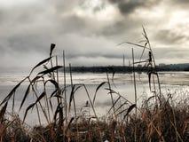 Marznący przedmieścia jezioro przy zima mgłowym dniem - zbliżenie pośpiechy Rosja, Arkhangelsk - Obraz Stock