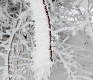 Marznący w lodowych gałąź Obrazy Royalty Free