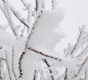Marznący w lodowych gałąź Zdjęcie Royalty Free