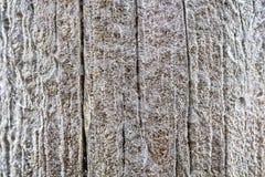 Marznięcie deszcz na drewnianym słupie zdjęcie royalty free