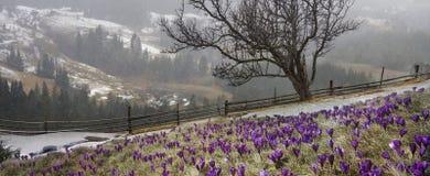 In marzo-aprile dopo un inverno Fotografie Stock Libere da Diritti