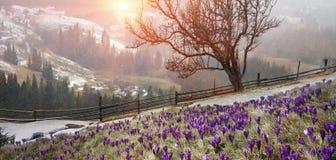 In marzo-aprile dopo un inverno Fotografia Stock Libera da Diritti