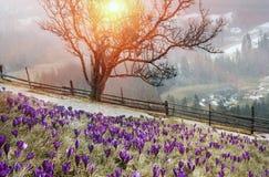In marzo-aprile dopo un inverno Fotografia Stock