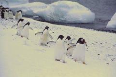 Marzo de los pingüinos Imagen de archivo libre de regalías