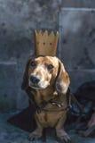 Marzo de perros basset Fotografía de archivo libre de regalías