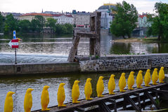 Marzo de pingüinos en el río de Moldava, Praga, República Checa Imágenes de archivo libres de regalías