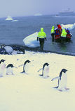 Marzo dei pinguini fotografia stock libera da diritti