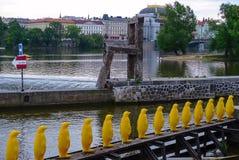 Marzo dei pinguini sul fiume della Moldava, Praga, repubblica Ceca immagini stock libere da diritti