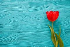 8 marzo, giorno del ` s della madre, tulipani su fondo blu Immagine Stock Libera da Diritti