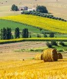 Marzo (Italia) - azienda agricola Immagini Stock Libere da Diritti