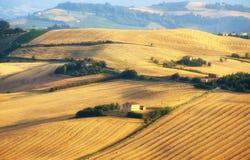 Marzo (Italia) - modific il terrenoare all'estate, azienda agricola Immagini Stock