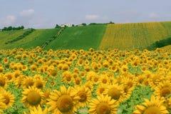 Marzos (Italia) - paisaje en el verano Imagen de archivo libre de regalías