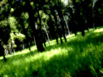 marzy o las obraz royalty free
