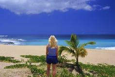 marzy tropikalnego obrazy stock