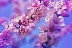 Marzycielscy kwiaty Zdjęcie Royalty Free