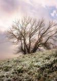 marzycielska drzewna zima Zdjęcia Royalty Free