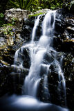 Marzycielska siklawa w lesie Obraz Royalty Free