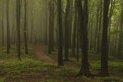 Marzycielski ślad w mgłowym lesie Zdjęcia Stock