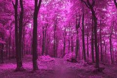 Marzycielski ślad w mgłowym lesie Obrazy Royalty Free