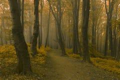 Marzycielski ślad w mgłowym lesie Zdjęcie Royalty Free