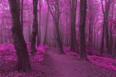 Marzycielski ślad w mgłowym lesie Fotografia Royalty Free