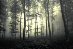 Marzycielski ciemny mgłowy lasowego drzewa krajobraz Obraz Stock