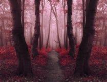 Marzycielski czerwony mgłowy las z bajka śladem Obraz Royalty Free