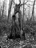 Marzycielski drzewo obraz stock