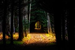 Marzycielski footpath w lesie - ja mógł być sceną fairyta obraz stock