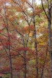 Marzycielski jesień las fotografia stock