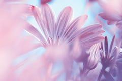 Marzycielski kwiecisty tło Fotografia Stock