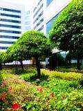 Marzycielski park w Tajlandia, z pięknymi kwiatami Zdjęcie Stock